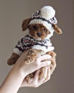 already for winter so cute: Winter Puppy, Cute Puppies, Cuteness Overload, Puppys, Dogs Puppies, Puppy S