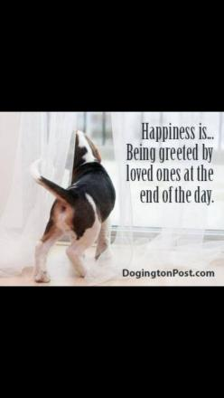 Happiness is being greeted by loved ones at the end of the day. How true!