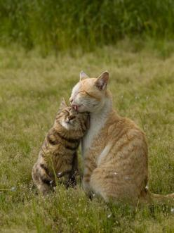 This Pin was discovered by Meow. Discover (and save!) your own Pins on Pinterest. | See more about kitty cats, cats and baby cats.: Kitty Cats, Sweet, Cute Cats, Pet, Cat Love, Kitty Kitty, Chat, Animal
