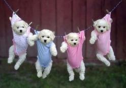 """Users also are sharing tons of cute puppy photos, like this one """"repinned"""" more than 300 times.: Puppies, Animals, Dogs, So Cute, Pets, Puppys, Funny, Adorable, Baby"""