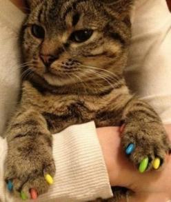 """I can do without the essentials, but I must have my luxuries."": Cats, Animals, Kitten, Pets, Funny, Kitty Kitty, Cat Nails, Kitty Caps, Nail Art"