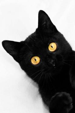 419214_164286067015624_100003026951671_240573_1364882855_n_large.jpg 480×720 pixels: Black Cats With Yellow Eyes, Animals, Eyes Blackcat, Cat Eyes, Black Cat With Yellow Eyes, Cat Love, Beautiful Black, Blackcats