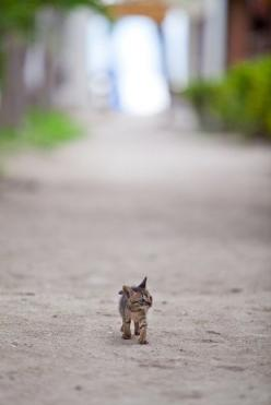 ~ big world, little me ~  questo sebra il nostro primo tigrotto da piccolo!!! miao!!!!: Cats, Animals, You Ll, Inspiration, Quotes, Eyes Open, Kitty, Moving Forward