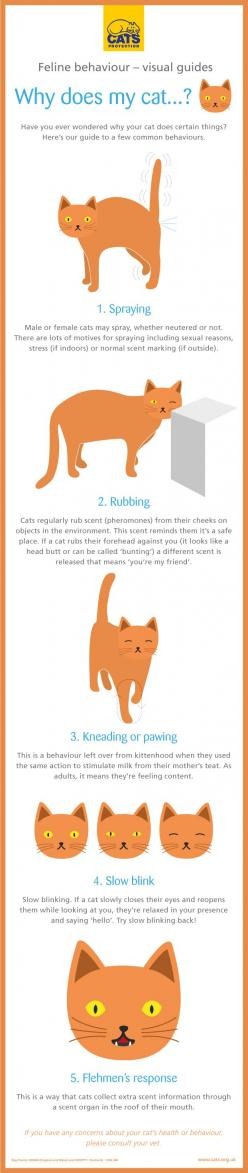 Cat behaviour guide #Cats #tips - Understanding Your Cat Behaviour better at Catsincare.com!: Cats Facts, Catbehaviour Catsprotectionuk, Blog Cats, Cat Stuff, Cat Facts, Cat Tip, Cat Catbehaviour, Animal