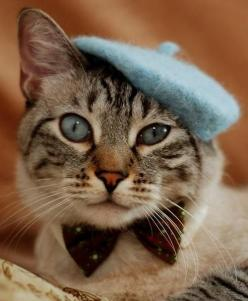 Comment allez-vous?: Kitty Cats, Animals, French Cat, Kitten, Kitty Kitty, Beret, Kitties, Has