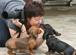 Daschunds and friend: Doggie, Kiss, Weenie Dogs, Dachshund, Doxie, Wiener Dogs, Hair, Friend, Animal