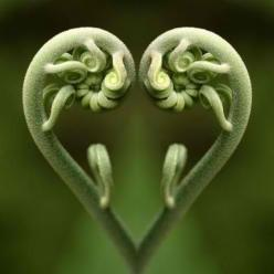 don't swipe 12 - https://www.facebook.com/diplyofficial: Green, Nature S, Valentine, Garden, Ferns, Photo, Flower