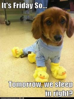 Friday's Fantastic Finds (6/14) at Inspiration for Moms: Animals, Dogs, So Cute, Pet, Funny, Adorable, Puppy, Things, Friday