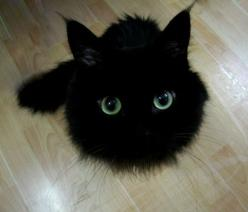 hahaha - avec treize comme titre, il ne manque plus qu'un chat noir sur la couverture - Crazy Face: Black Cat: Face, Kitten, Animals, Black Cats, Pets, Funny, Blackcats, Kitty, Eyes