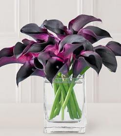 Hot Chocolate Calla Lilies - Liz absolutely loves these callas - this is her fav!: Color, Wedding Ideas, Calla Lilies, Callalily, Purple Calla, Flowers, Calla Lily, Favorite Flower