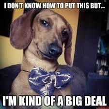 I don't know how to put this but...: Animals, Dogs, Funny, Doxies, Funnies, Dachshund Meme, I M Kind