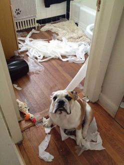 I was just walking by and got caught in this mess!!!!!!: Cats, Bulldogs 3, Animals, English Bulldogs, Baggy Bulldogs, Funny, Bulldogs Frenchies Pitties, Bulldogs Pets, Bulldogs Oops