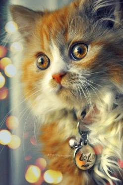 If eyes are the window to the soul this kitten is bearing it's soul.: Kitty Cats, Animals, Beautiful Cats, Pet, Pretty Cat, Kitty Kitty, Kittens, Eye