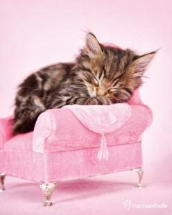 for Cat chaise longue