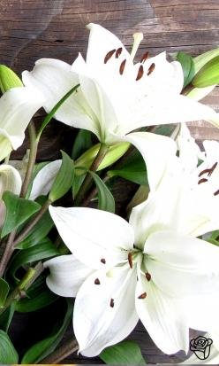 Lovely arrangement from the Bouqs ==: White Flowers, Favorite Flowers, Plants, Beautiful Flowers, Bloom, Things, White Lilies, Beautiful Lilies, Lilies Flowers
