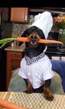 Lucien, Le Chien!. . . Le Doggy Chef! . . .Creates From A Carrot Designs That You Cannot! ~ Lucien, Le Chien, Le Chef!~  Dachshund / Doxie: Heads, Carrot Cakes, Cake Recipe, Animals, Daschund, Dogs, Doxie, Carrots