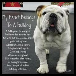 My Heart Belongs To A Bulldog A Bulldog's not for everyone, You'll know fromt the start- But when that Bulldog looked at me, I quickly lost my heart.  A breed with quite a history, A dog that stands apart- Clever & Devoted, With such a loving