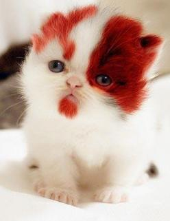 O gatinho do Kratos... such a pretty little thing!!: Cats, Little Things, Kitten, Animals