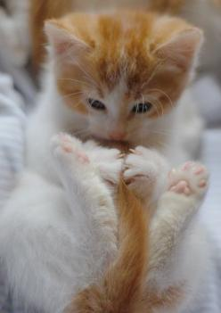OH MY GOSH ITS A WIDDLE KITTY: Kitty Cats, Animals, Sweet, Pet, Adorable, Kittens, Kitties