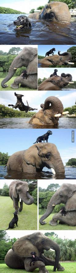 Ohmygoodness.: Favorite Animals, Best Friends, Bella Elephant, Inseparable Bffs, Natural Buddies, Elephants 3
