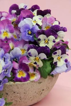 Pansies Tablescape Centerpiece www.tablescapesbydesign.com https://www.facebook.com/pages/Tablescapes-By-Design/129811416695: Purple, Perfect Love, Violet, Pansy, Beautiful Flowers, Pretty Pansies, Flowers, Garden