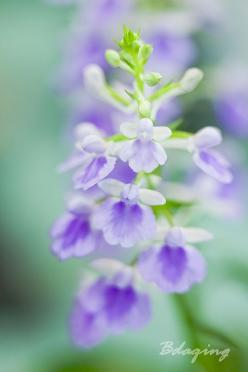 Pastel..: Flowers Gardens, Soft Colors, Delicate, Purple Flowers, Beautiful Flowers, Art Flowers, Bokeh Flowers, Color Photography