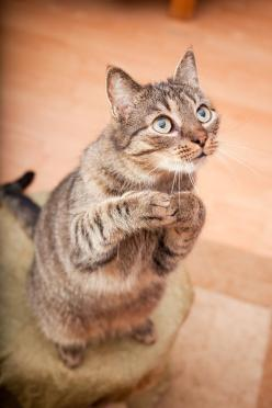 Please sir...can I have some more?: Cats, Animals, Pet, Andrew Tarnawczyk, Funny, Chat, Treat
