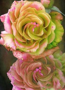 ~~Roses For You by WOBBLYMOL~~: Beautiful Roses, Color, Beautiful Flowers, Bloom, Rose Garden, Pink Rose, Roses Roses Roses