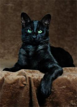 Stunning Black Cat ❤: Animals, Black Beauty, Black Kitties, Black Cats, Beautiful Black, Kitty Kitty, Green Eyes, Cats Black, Blackcats