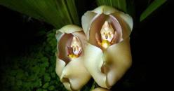 Swaddled Babies: 23 Rare Flowers That Look Almost Nothing Like Flowers. #3 Is Slightly Horrifying: Amazing Flowers, Nature, Rare Flowers Beauty, Rare Orchids, Baby Orchids, 23 Rare, Rare Beautiful Flowers