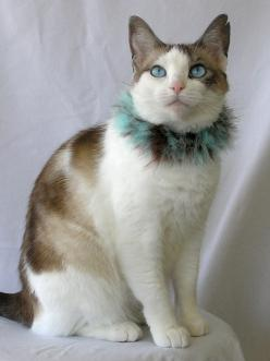 This is not technically a tie-wearing cat, but c'mon a feather boa beats a tie any day of the week.: Kitty Cats, Friends, Pet, Animals 521, Animals Cats, Amazing Animals, Feline