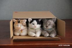 Three little cats lost their flats, and had to move in as one. They found that their flat was small for three cats, and one squatter had to run.: Cats In Boxes, Animals, Friends, Needle Felted Cat, Cats Boxed, Crazy Cat, Cats Lost, Cats Kittens