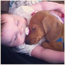 Too adorable: Babies, Baby Doxie, Animals Pets, Dachshund, Doxie S, Doxies, Puppy, Dog, Friend