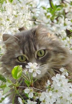 (via Take time….to pet a cat | ❀ Spring Sweetness ❀ | Pinterest): Cats, Beautiful Cat, Animals, Kitten, Pet, Kitty Kitty, Chat, Flowers