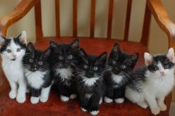 white and black, black and white....: Animals, Tuxedo Cats, Black And White, Black Black, Kitty Kitty, Adorable, Kittens, Furry Friends