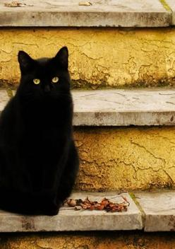 black kitty, please keep inside during Oct! too many are taken & harmed: Yellow Stair, Kitten, Black Kitty, Chat Noir, Autumn, Black Cats, Kitty Kitty, Blackcats