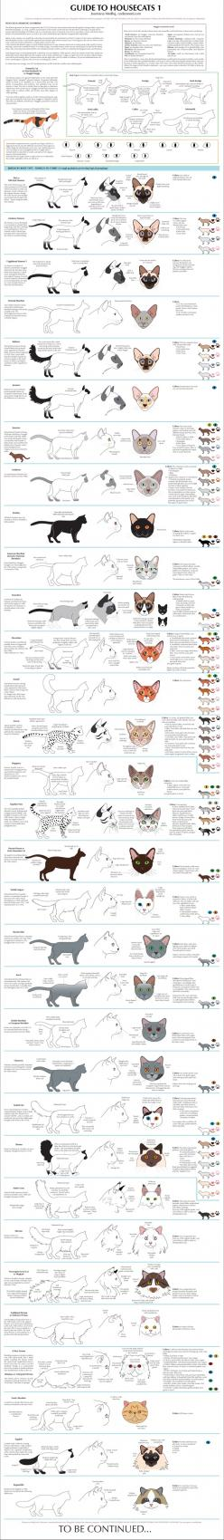 Cat breeds: Cat Drawing Tutorial, Drawing Cat, Housecat Breeds, Vet Tech, Cat House, House Cat, Cats Breed