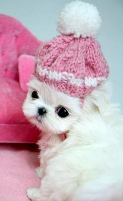 Check out more at Those Funny Animals - http://www.funny-animal-pictures.org/check-out-more-at-those-funny-animals-75/: Pink Hat, Animals, Dogs, Pet, Puppys, Box, Adorable Animal