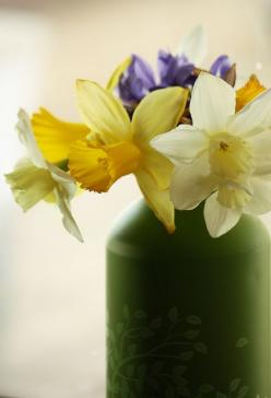 Daffodils in the Window by beegardener, #Daffodils: Spring Flowers, Beegardener Daffodils, Daffodils Spring, Flowers Plants, Beautiful Flowers, Flower Gardens, Windows, Daffodils Beegardener