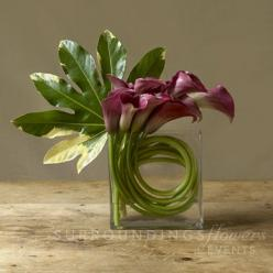 Flower delivery in New York by New York florist - Calla lilies presented with tranquility, balance and style. Also available in deep burgand...: Tranquility Balance, Floral Design, Calla Lilies, Lily Centerpiece, Flower Arrangements, Lilies Presented, Flo