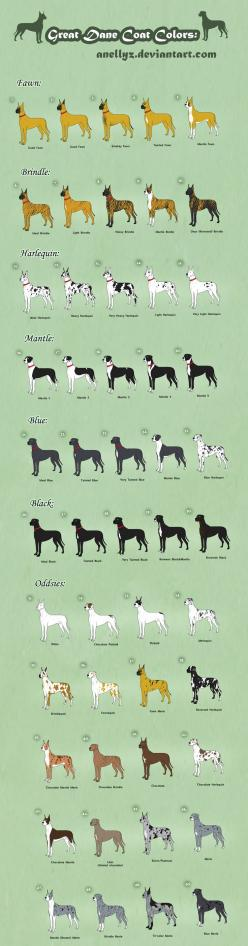 Great Dane Coat Colors - Adoptables (closed) by ~Anellyz on deviantART ...........click here to find out more http://googydog.com: Great Danes, Dane Coat, Colors Adoptables, Adoptables Closed, Black Great Dane, Dane Color, Blue Merle Great Dane