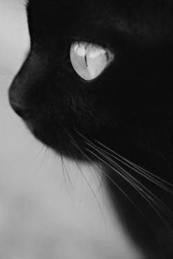 I have a thing about black cats...  How could you possibly be superstitious of these adorable things?! :D: Babycutelittlecats 13Faqs, Cat Eyes, Animals ️, Black Cats, Baby Cats