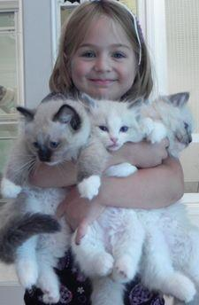 Ragdoll Cats and Kittens from CashmereRags- I so want one of these kittens but they are soooo expensive =(: Cats Cats, Kitty Cats, Ragdoll Cats, Ragdoll Kittens, Crazy Cat, Cats And Kittens, Animal, Cat Lady