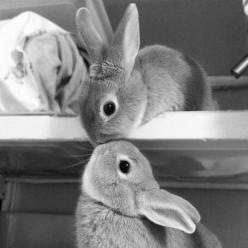 Smooch!: Rabbit, Animals, Cuteness, Sweet, Pet, Things, Bunnies