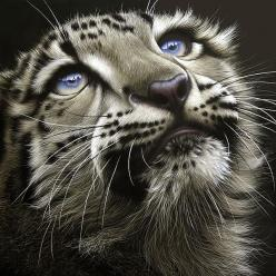 ✯ Snow Leopard Cub - Many things you have done, o Jehovah my God, even your wonderful works... There is none to be compared to you.  We're I inclined to tell and to speak of them, They have become more numerous than I can recount. ---Psalms 40:5: Wild
