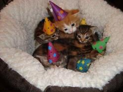 These kittens who threw the cutest birthday party in the universe. | 39 Overly Adorable Kittens To Brighten Your Day: Cats, Birthday, Animals, Party'S, Parties, Kitten Party, Kittens, Kitty, Has