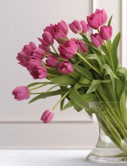 tulip: Favorite Flowers, Color, Beautiful Flowers, Floral Arrangement, Flowers, Photo, Garden, Pink Tulips, Flower
