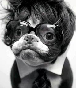 When Barry Manilow and Roy Orbison mated. lol: Animals, Dogs, Stuff, Pet, Funny, Funnies, Things, Boston Terriers, Elton John