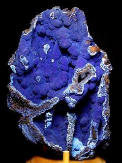 Breathtaking specimen of velvety Azurite on matrix from Bisbee, Arizona!! Classic specimen measuring 16 cm by 11 cm in size. I love Bisbee specimens and this would rate as one of the best 5 specimens I have seen of this variety. Very aesthetic! From the A