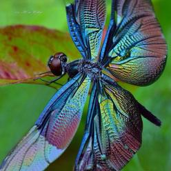Dragonfly #insect #animal: Photos, Butterfly, Color, Posts, Things, Dragonfly, Animal, Dragonflies